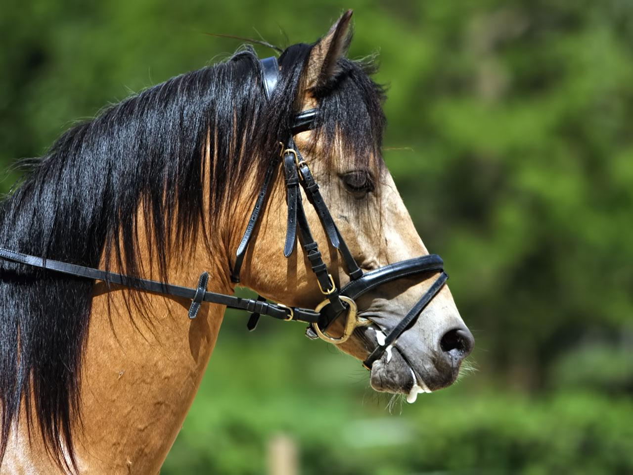 Pferdetrense