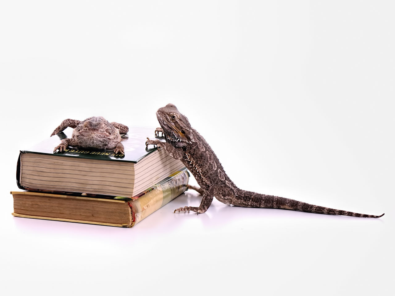 Reptilien Bücher