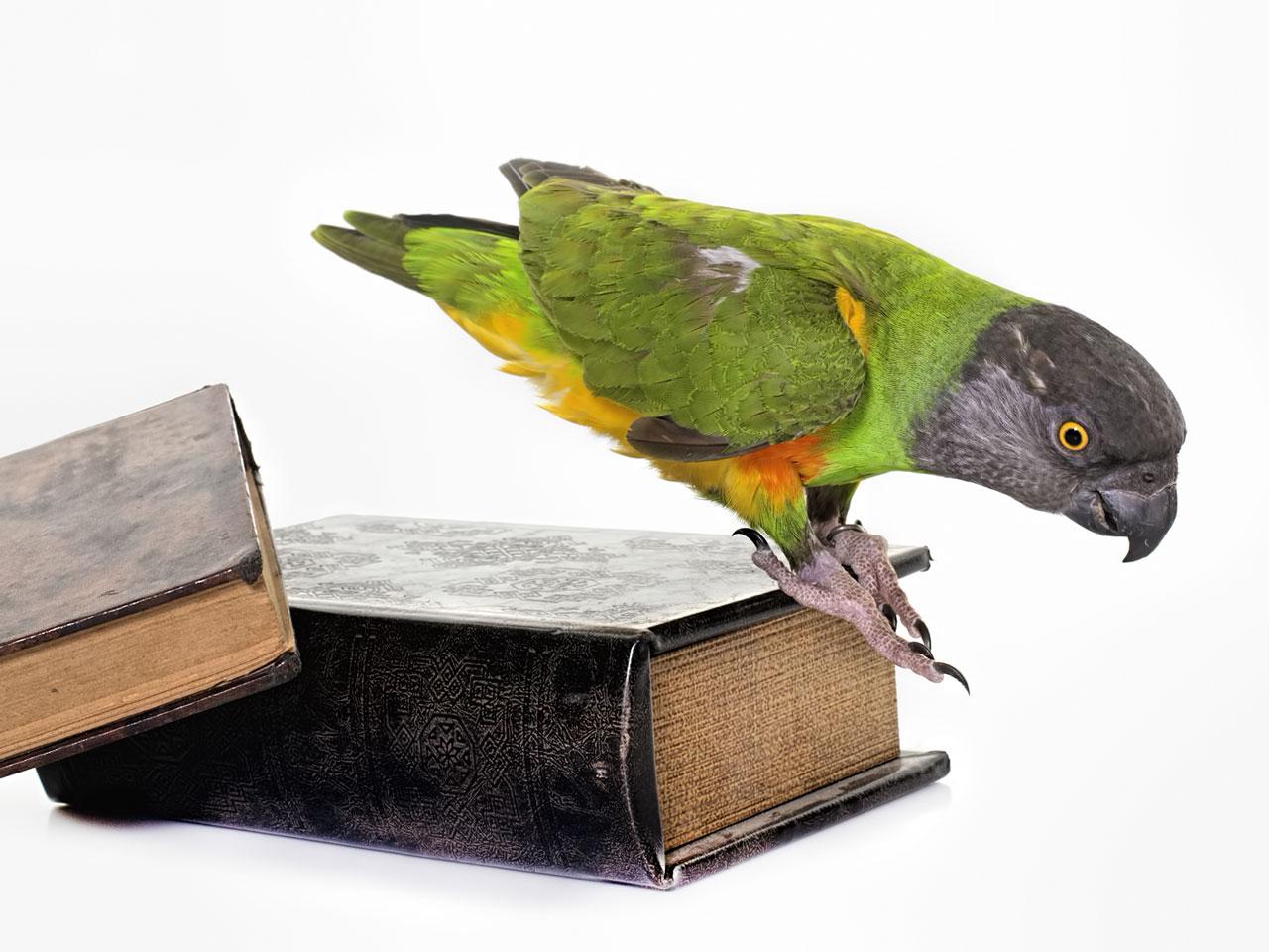 Vogelbücher