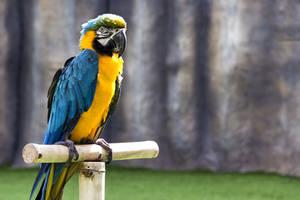 Papagei auf Freisitz