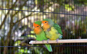 Vögel auf Sitzstange