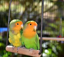 Vogelschaukel